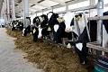 ЗАО «Совхоз им. Ленина» приступает к строительству молочно-товарной фермы в поселении Развилковское