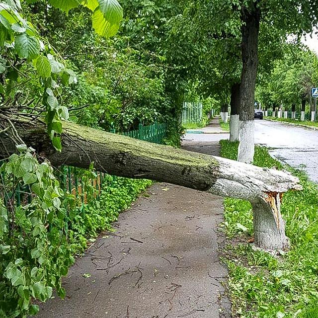 Последствия урагана в Видном и Ленинском районе. Фоторепортаж фото 28