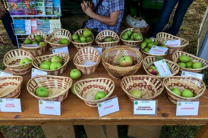 В Расторгуевском парке города Видное прошел фестиваль «Яблочный спас». Фоторепортаж фото 12