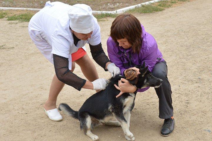 На территории Видного объявлен карантин по бешенству животных
