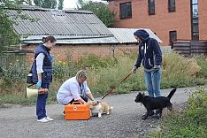 1 и 6 ноября в Видном проведут бесплатную вакцинацию животных