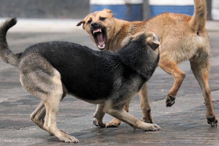 На территории Ленинского района производится отлов бродячих животных