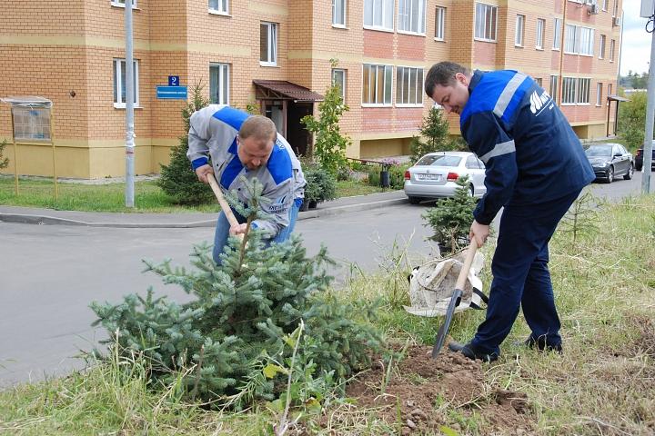 «Москокс» продолжает озеленять ближайший к заводу микрорайон «Видный»