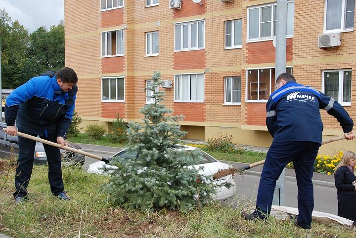 «Москокс» продолжает озеленять ближайший к заводу микрорайон «Видный» фото 2