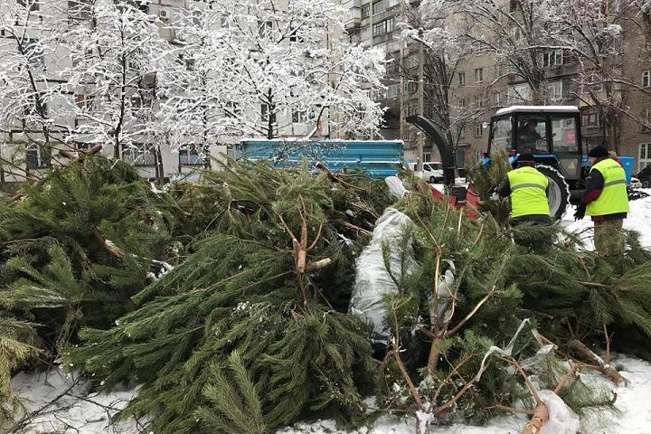 В Видном и Ленинском городком округе откроются пункты приема живых новогодних елок
