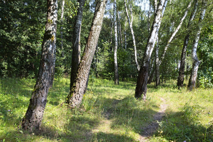 tabolovksy-les708-5.jpg